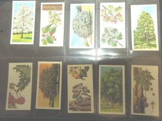 1966 Brooke Bond Tea Trees In Britain Flowers Leaves Trade Card Set 50 Cards
