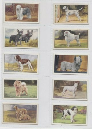 Gallaher Set: Dogs A Series 1936